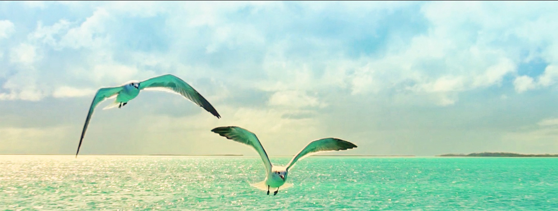 Birds flying over sea in Cayo Coco