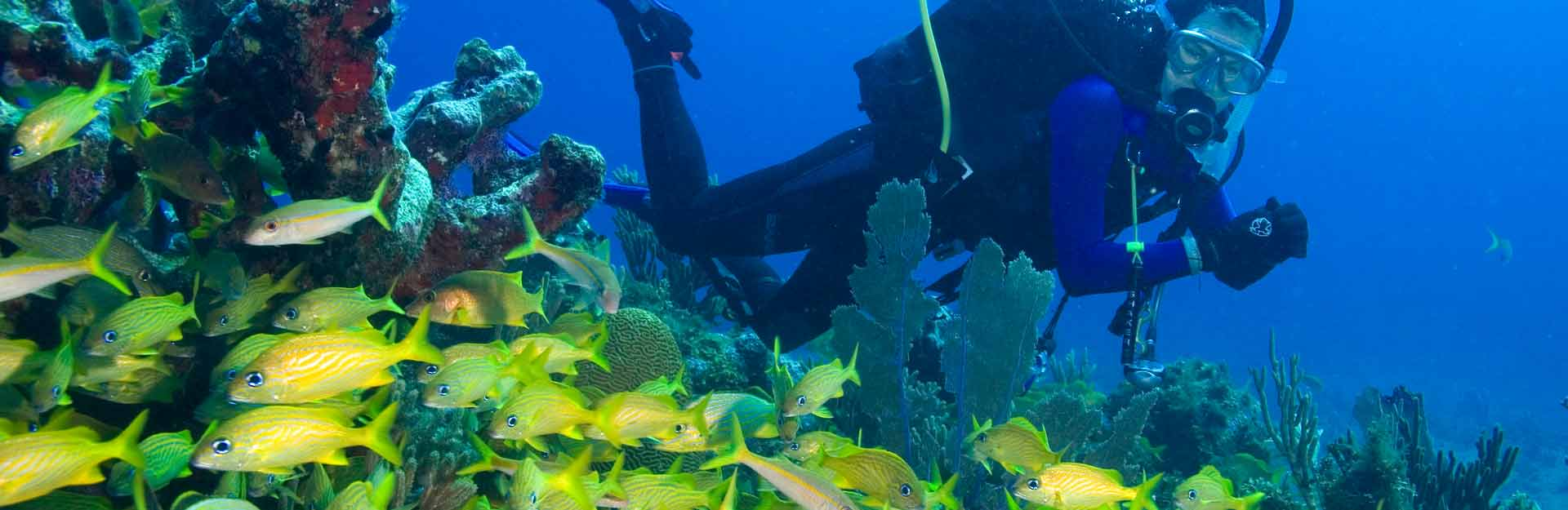 Diving, Beaches, Los Canarreos Archipelago, Coral Reef, Underwater Fauna and FloraTransel.