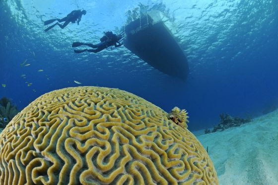 The Greatest of the Antilles' sea bottom attractions.